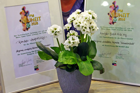 Bergenia Schneekristall wins two novelty prices at IPM 2018
