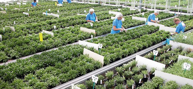 InnovaPlant starter cultivars