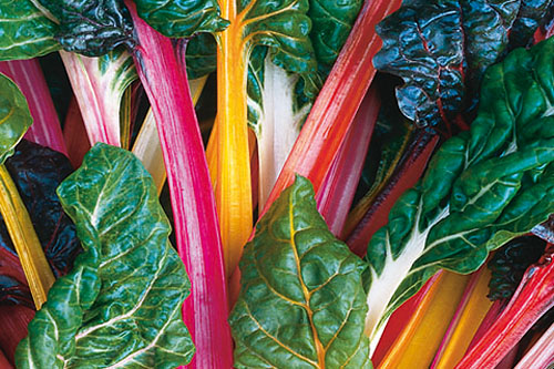 Vegetable Plants: Beta vulgaris  Bright Lights
