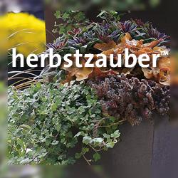 https://www.kientzler.eu/vkhilfen/herbstzauber-stauden.jpg